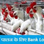 [लोन] राजस्थान मुर्गी पालन लोन योजना  ऑनलाइन आवेदन  एप्लीकेशन फॉर्म