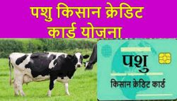 पशु किसान क्रेडिट कार्ड योजना 2021|आवेदन कैसे करे|Pashu credit card yojana
